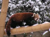 photo Firefox dans la neige 1