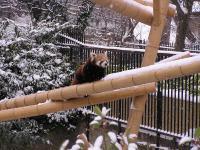 photo Firefox dans la neige 2
