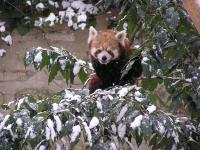 photo Firefox dans la neige 3
