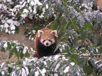 photo Firefox dans la neige 4