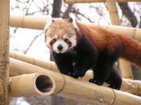 photo Firefox dans la neige 5
